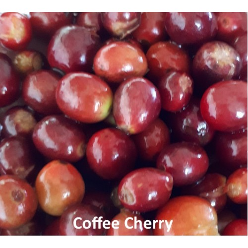 DEVI Coffee Cherry Tea